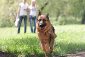 Ein Paar geht mit seinem Hund im Park spazieren