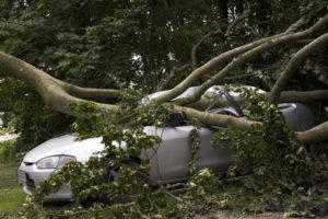 Ein umgestürzter Baum auf einem hellen Auto